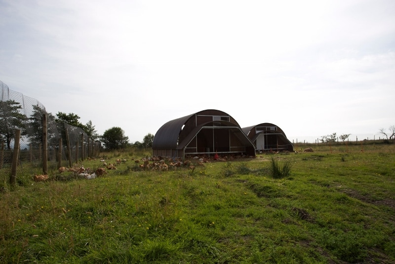 Movable chicken sheds